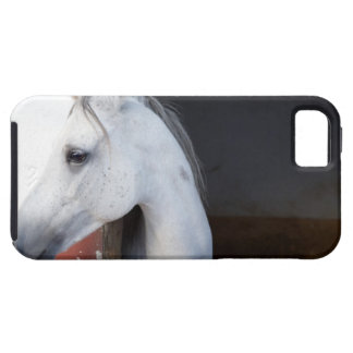 A Horse (Equidae) iPhone 5 Cover