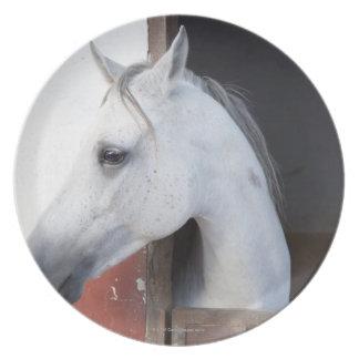 A Horse (Equidae) Plate