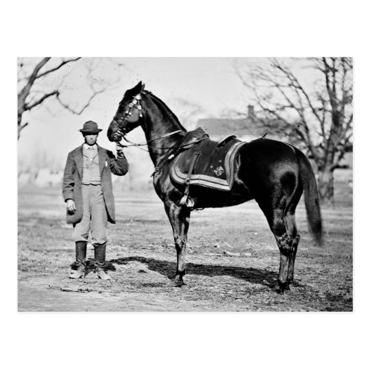 A Horse Named Cincinnati, 1865 Postcard
