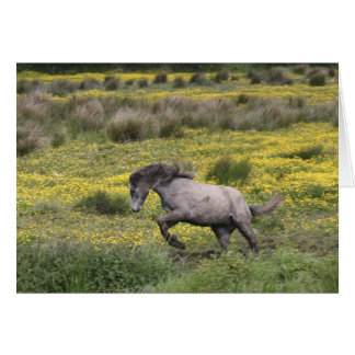 A horse running in a field of yellow wildflowers card