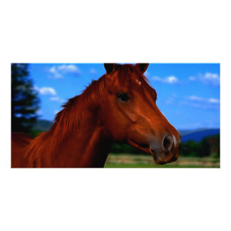A horse standing proud customized photo card
