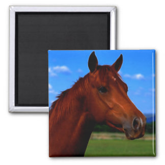 A horse standing proud square magnet