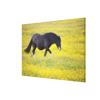 A Horse Walking In A Field Of Yellow Flowers Canvas Print