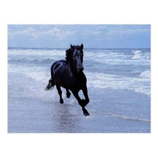 A horse wild and free post cards
