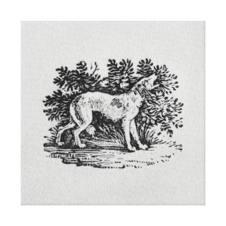 A Hound from 'History of Quadrupeds' Canvas Print