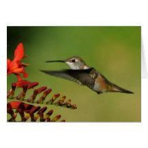 A Hummingbird on Lucifer Crocosmia Greeting Card