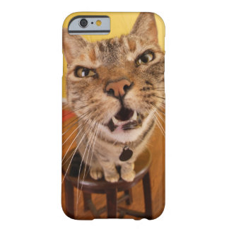 A humorous little cat sits on a stool in a barely there iPhone 6 case