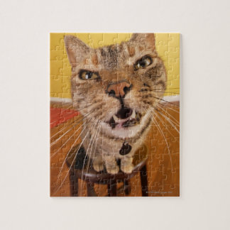 A humorous little cat sits on a stool in a jigsaw puzzle