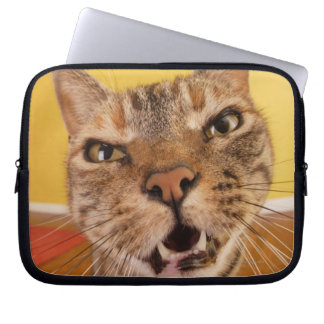 A humorous little cat sits on a stool in a laptop sleeve
