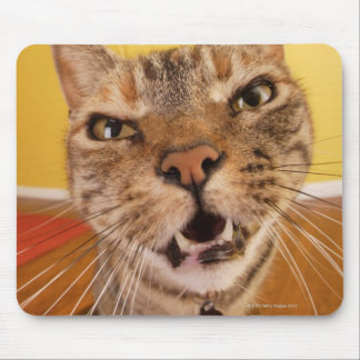 A humorous little cat sits on a stool in a mouse mat