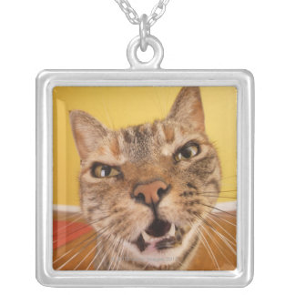 A humorous little cat sits on a stool in a silver plated necklace