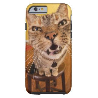 A humorous little cat sits on a stool in a tough iPhone 6 case
