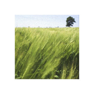 a inspired field canvas canvas print
