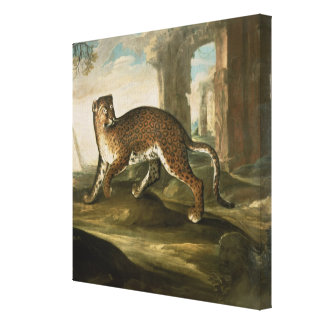 A Jaguar Canvas Print