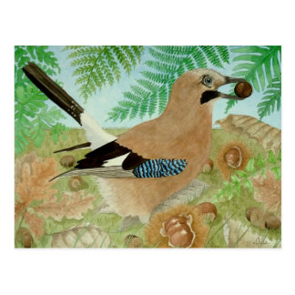 A Jay in the fall Postcard