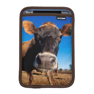 A Jersey cow being inquisitive iPad Mini Sleeve