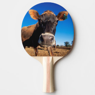 A Jersey cow being inquisitive Ping Pong Paddle