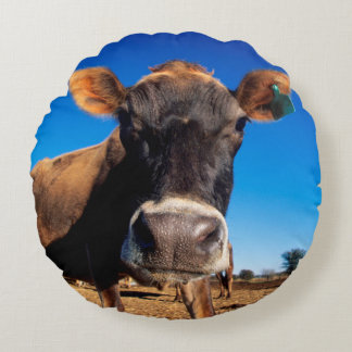 A Jersey cow being inquisitive Round Cushion