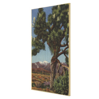 A Joshua Palm in Bloom in Californian Desert Canvas Print