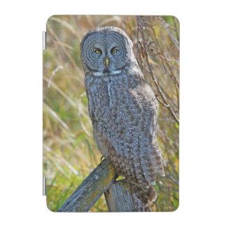 A juvenal Great Grey Owl1 iPad Mini Cover
