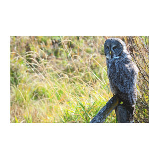 A juvenal Great Grey Owl 2 Canvas Print