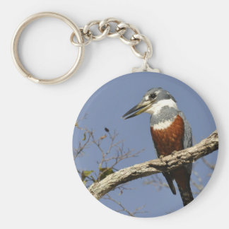 A Kingfisher Perches in a branch of a Tree Basic Round Button Key Ring