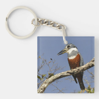 A Kingfisher Perches in a branch of a Tree Double-Sided Square Acrylic Key Ring