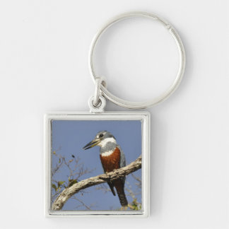 A Kingfisher Perches in a branch of a Tree Silver-Colored Square Key Ring