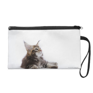 A kitten of Maine Coon cat Wristlet