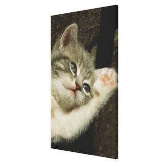 A kitten, with large blue eyes, lays on it's canvas print