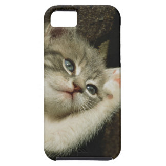 A kitten, with large blue eyes, lays on it's iPhone 5 covers