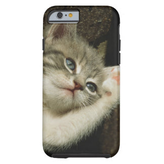 A kitten, with large blue eyes, lays on it's tough iPhone 6 case