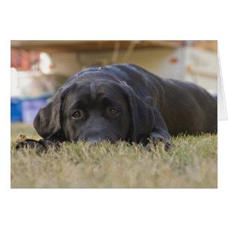A Labrador Retriever puppy. Card