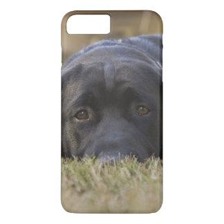 A Labrador Retriever puppy. iPhone 8 Plus/7 Plus Case