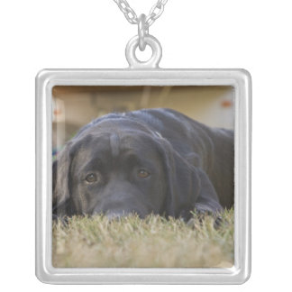 A Labrador Retriever puppy. Silver Plated Necklace