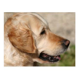 A Labrador s Smile Postcards