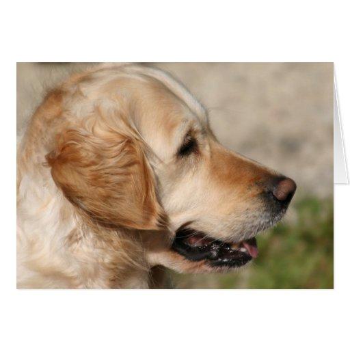 A Labrador's Smile Card