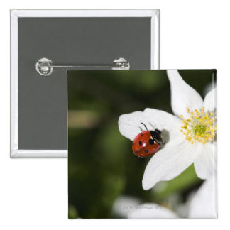 A ladybird on a wood anemone Stockholm Sweden 15 Cm Square Badge