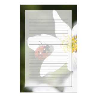 A ladybird on a wood anemone Stockholm Sweden Custom Stationery