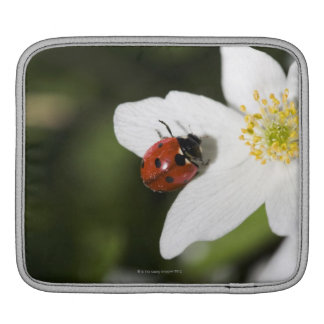 A ladybird on a wood anemone Stockholm Sweden iPad Sleeve