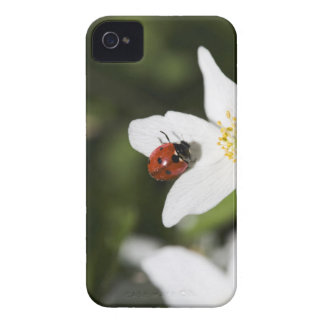 A ladybird on a wood anemone Stockholm Sweden. iPhone 4 Case-Mate Case