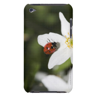 A ladybird on a wood anemone Stockholm Sweden. iPod Touch Covers