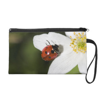 A ladybird on a wood anemone Stockholm Sweden Wristlet Clutches