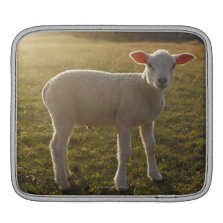A Lamb at the Setting of the Sun Sweden iPad Sleeve