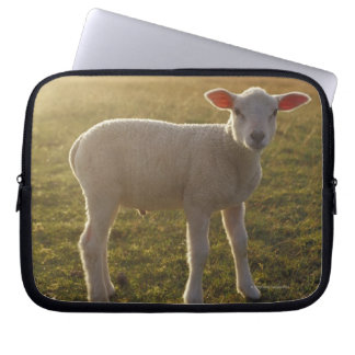 A Lamb at the Setting of the Sun Sweden Laptop Sleeve