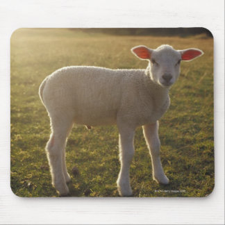 A Lamb at the Setting of the Sun Sweden Mouse Mat
