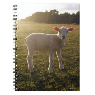 A Lamb at the Setting of the Sun Sweden Notebooks