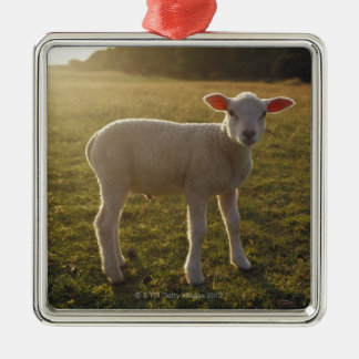 A Lamb at the Setting of the Sun Sweden Silver-Colored Square Decoration