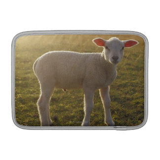 A Lamb at the Setting of the Sun Sweden Sleeve For MacBook Air