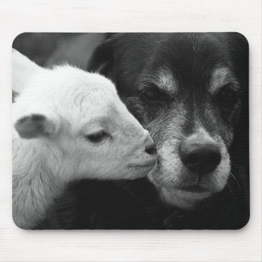 A Lamb's Kiss Mouse Mat